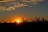 Arizona Sunset (craigsanders429) Tags: sunsetphotography sunsets sunset sunsetcolors cactus arizona tucsonarizona cloudsandsky clouds mountains