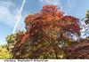 Vibrance (Trevor Watts Photography) Tags: westonbirt arboretum vibrant autumn colours fall autumnal trevorwatts © nikon d750 wide angle sigma gb uk england