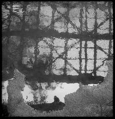 Reflejos en el río (mavricich) Tags: argentina atardecer arte agua film lomography monocromo robot monocromático iguazú rio roca árbol cielo río paisaje planta plant zeiss jena 40mm f2 película analógico analogic selva sudamérica cataratas misiones neblina parque bosque