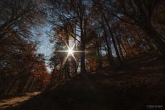 Il sole in mezzo agli alberi (Silver_63) Tags: sole albero foliage zegna