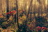 Herbstlich / Autumnal (Lispeltuut) Tags: nature herbst autumn bäume trees wald forest blätter laves coth coth5