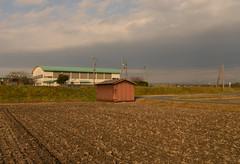Between rice and wheat. (Yasuyuki Oomagari) Tags: field shed highschool autumn rice wheat nikon d800e 2470mmf28g nikkor