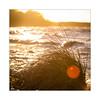 sundown autumn beach (mmsig) Tags: 2017 eos60d ostsee rosenhagen mmsig beach strand see sea seaside sun sonne dusk sundown gelb sonnenuntergang baltic sky strandhafer wellen wave brandung backlight gegenlicht blendenfleck