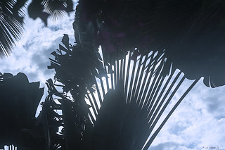 IL CIELO FRA LE PALME.   ----    THE SKY BETWEEN THE PALM TREES