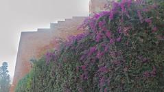 20171029_154016_HDR (uweschami) Tags: spanien espania malaga urlaub stadt alcazaba gibralfaro santaiglesia museopicasso plaza hafen mittelmeer