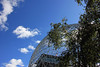 Ciel, arbres, dôme (Sky, Trees, Dome) (JB by the Sea) Tags: montreal montréal quebec québec canada september2017 parcjeandrapeau parcdesîles îlesaintehélène sthelensisland biosphere biosphère buckminsterfuller geodesicdome expo67