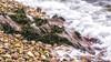 Islay Rock (warth man) Tags: d7200 nikon70300mmvr islay rock shore beach sea striations stones seaweed