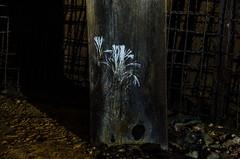 Je voulais être une fleur (-J.R.-) Tags: underground night dark nightshot noir obscur champignon moisissure moist mushroom cave light carrière mine