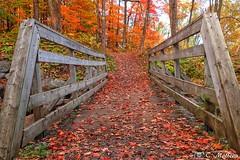 171011-03 Couleurs d'automne (explore) (clamato39) Tags: parcchauveau autumn automne provincedequébec québec canada nature couleurs colors pont bridge