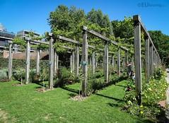 Les Treillies of Parc de Bercy (eutouring) Tags: paris france travel parc park parcdebercy bercy bercypark treillies trellis wine wines vines