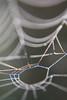 Misty webs (Joelle Rademakers Fotografie) Tags: mist fog dew dewdrops drops macro nikon nikonphotography d3100 webs spiderwebs web nature naturelovers fall september 2017 netherlands garden morning nofilter