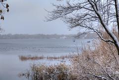 First Snow 10-27-2017 019 (wogggieee) Tags: bear lake mn minnesota white whitebearlake colors county fall hugo pretty ramsey snow trees washington winter unitedstates us