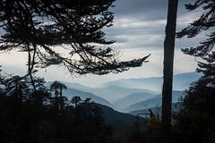 Gocha-la trek in Sikkim, India (David Ducoin) Tags: asia cloud dzongri gochala hike himalaya india kangchenjunga landscape mountain nationalpark shadowgraph sikkim trek gangtok in