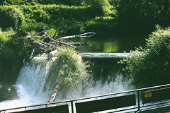 can-we-stay-this-way (FADICH PHOTOGRAPHY) Tags: oly olympia washington fadichphotography 2017 nature park tumwater tumwaterfalls falls plants trees river