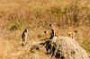 SENEGAL -  310 (Giulio Mazzini) Tags: adventure africa avventure black desert face free holiday landscape libertà portrait river senegal sun teranga world