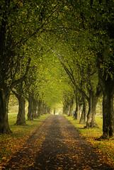Hints of Autumn (l4ts) Tags: landscape derbyshire holmesfield moorwood lab ne trees avenue autumn autumncolours fallenleaves