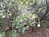 IMG_20171008_114629 (MargaretDonald) Tags: 08102017 narrabribingararoad sawnrocks caper