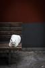 Siesta (art180) Tags: cinque terre art180 italien tier katze weis weiss rot wand bank kontrast grau liegend ausruhen blick corniglia cat animal recumbent bench seat wall geometry geometrie stripes streifen kater tomcat