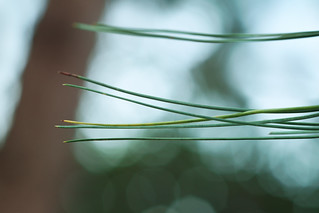 Lines of pine needles.