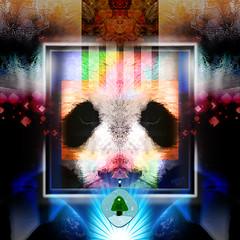 Panda (mfuata) Tags: panda color renk nature doğal message mesaj symmetry simetri classic klasik light ışık mystery sır