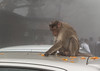 11. Doritos on the Roof-1 (leemacey) Tags: doritos hold nandi india monkey