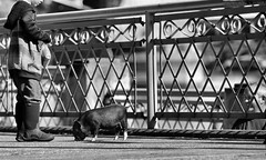 This Little Piggy (Ian Sane) Tags: ian sane images thislittlepiggy boy pig pet feeding bestpetever governor tom mccall waterfront city park salmon street fountain downtown portland oregon candid photography canon eos 5ds r camera ef70200mm f28l is usm lens hmm