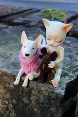 Kukka and Kitten (Darkshiney) Tags: pipos baha iplehouse terrier bjd