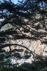 untitled-5.jpg (mat3o) Tags: ca trees hike waterfall mcwaybeach bigsur trail redwoods ewoldsentrail route1 coast california pch