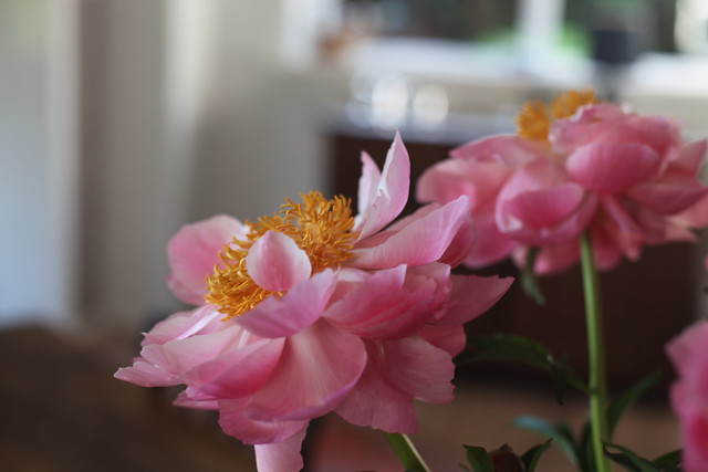 Oranje kroon, roze wangen