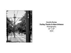 """Trolley Tracks in New Orleans • <a style=""""font-size:0.8em;"""" href=""""https://www.flickr.com/photos/124378531@N04/37106284213/"""" target=""""_blank"""">View on Flickr</a>"""