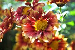 Cascada de las Ánimas (Javiera C) Tags: chile santiago cajón canyon andes cordillera trip color rústico flor flower jardín cajóndelmaipo