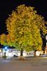 Yellow Tree in Garmisch (LouieVSATX) Tags: garmisch folliage gemany fallfolliage nikon35mm18