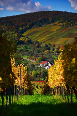 Fall view (DrQ_Emilian) Tags: fall autumn colors vineyards light outdoors season hill view landscape travel stetten kernen remstal germany badenwürttemberg europe