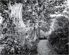 Leaving the mystical Place... (Ody on the mount) Tags: anlässe bäume em5ii fototour mzuiko918 omd olympus pflanzen schwäbischealb wald wege bw monochrome sw