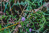 Grass #009 (shafa_rah) Tags: grass green nature flower plant aesthetic naturallight cooltones thistle