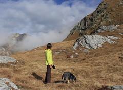Nasco et moi (bulbocode909) Tags: valais suisse italie frontières coldugrandstbernard montagnes nature chiens brume automne bleu jaune rochers