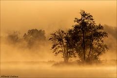 Misty Treeline Sunrise (Daniel Cadieux) Tags: sunrise ottawa ottawariver petrieisland tree trees silhouette mist misty fog foggy