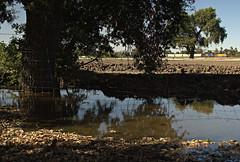 East Stockton (ryanclark13) Tags: oaktree water farm train economy nikon bnsf