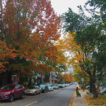 Late Fall 2017 - Maple Trees with some leaves in November thumbnail