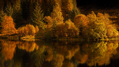 Autumn Gold (Adam West Photography) Tags: achray adamwest alpine autumngold conifer drunkie fir forrest framing gold green highlands lake leaves loch mirror oak perfect reflections scotland spruce still trossachs uk