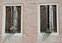 Es wächst * It's growing * Está creciendo *    . DSC_1474-001 (maya.walti HK) Tags: 091017 20082017 2017 6tag copyrightbymayawaltihk dorsoduro fenster flickr italia italien italy nikond3000 reisevenedig2017 venecia venedig venedigreise2017 venezia venice ventanas windows