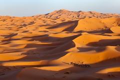 Merzouga Dunes (aivar.mikko) Tags: sahara merzouga ergchebbi erg chebbi morocco camels caravan desert dunes dune sand moroccan desertlandscapes northafrica northafrican north africa african moroccanlandsacapes landscape landscapes africanlandscapes scenic view sunset