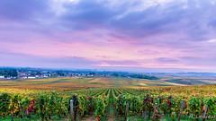 Vignobles en Bourgogne (Vosne-Romanée) (Shoot Enraw) Tags: vignes vosneromanée bourgogne brume automne couleurs