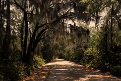 Spanish Moss and Dirt Road (Mike McCall) Tags: copyright2017mikemccall photography photo image georgia usa vernacular culture southern america thesouth unitedstates northamerica south libert county coast coastal dirt road country spanish moss spanishmoss nature sand tree rural