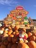 Sanrio x Tanaka Farms (tiramisu_addict) Tags: sanriotanakafarmssanrioxtanakafarmsirvinetoysplushkawaiilittleforestfellowmeroosanriocharacterspumpkinpumpkinpatch hellokitty mymelody scarecrow keroppi chococat pochacco
