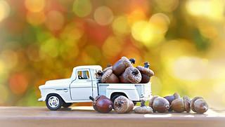 Acorn harvest on a sunny Fall day