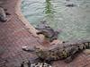 PA224233 (tatsuya.fukata) Tags: thailand samutprakan crocodilefarm animal crocodile