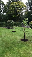 (mibe661) Tags: grafting garden apple green