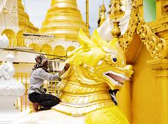 La ilusion de lo dorado (Nebelkuss) Tags: wtbw birmania myanmar yangon shwedagon dorado golden templo temple pagoda pintor painter chinthe fujixt1 fujinonxf1855 mingalaba