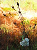 Upton (the_gonz) Tags: upton pontefract naturereserve nature